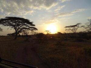 Serengeti sunset Tanzania safar