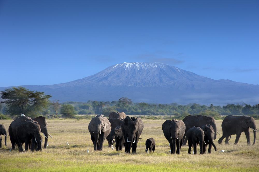 Elephant herd - Tanzania Safari - Proud African Safaris