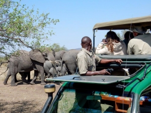 Elephant family Tanzania Safari