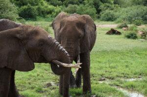 Elephants photo safari